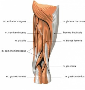Biceps Femoris Tendonitis cause of back of knee pain